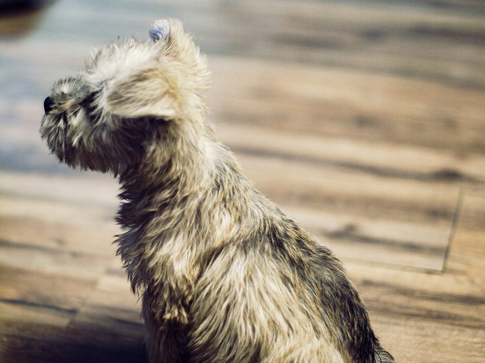 Great Breeds For People Who Want Small Dogs